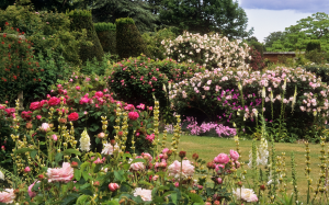 mottisford abbey rose garden hampshire